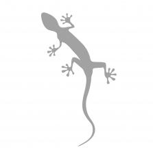 Kleebis Gecko, floretthall